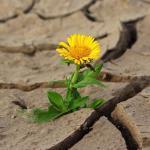 Comment se forment les conflits personnels, source de malheur et de conflits interpersonnels… Ch4 QSJ