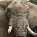 Boire à la source des résultats, ou comment faire pour manger un éléphant?
