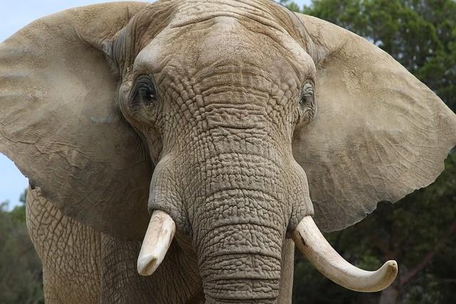 Boire à la source des résultats, ou comment faire pour manger un éléphant? NicolasSarrasin.com